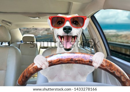 Portrait of a funny dog Jack Russell Terrier in sunglasses behind the wheel of a car #1433278166