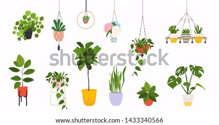 Set of macrame hangers for plants growing in pots. Flowerpot isolated objects, houseplant flower pot collection.  #1433340566