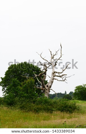 Simple landscape depicting a dead tree in Hampstead Heath, London, England #1433389034