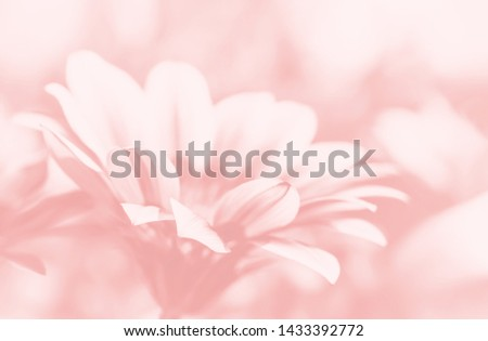 Floral background. Abstract blurred image of gerbera flowers #1433392772
