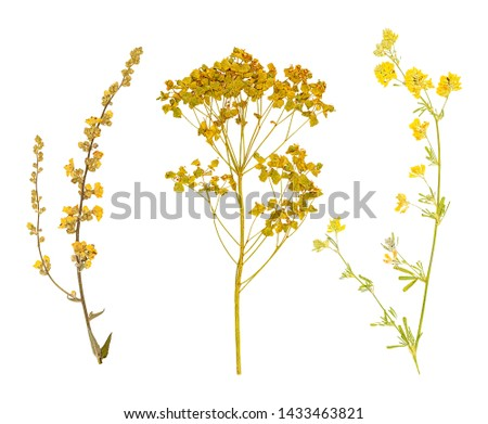Set of herbarium wild dry pressed flowers and leaves, isolated #1433463821