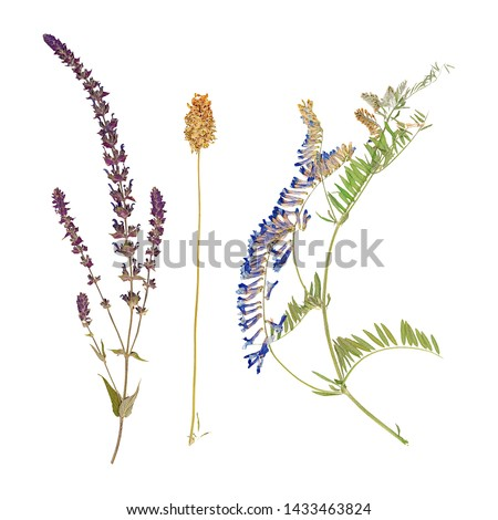 Set of herbarium wild dry pressed flowers and leaves, isolated #1433463824