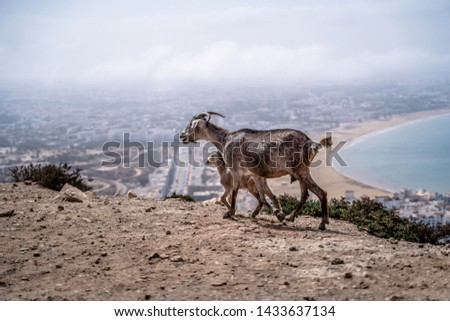 Goat on the slope, mountain, water #1433637134