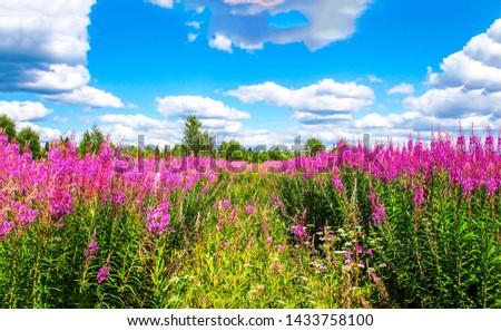 Summer meadow flowers. Summer meadow flowers landscape. Summer meadow flowers blue sky white clouds. Summer meadow flowers view #1433758100