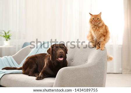 Cat and dog together on sofa indoors. Fluffy friends #1434189755