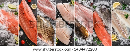 Food collage of various fresh fillet fish, white fish pangasius, salmon red fish, trout fish steak with ice and spices. Seafood, top view #1434492200