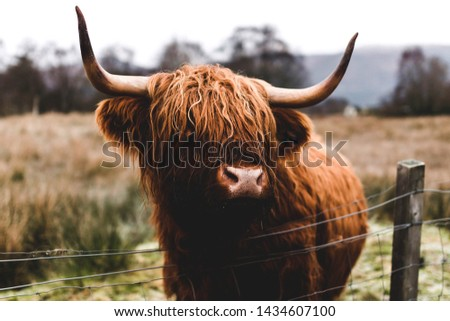 A Highland Cow spotted on our scottish road trip through the highlands. #1434607100