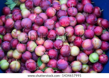 Organically grown plums without pesticides #1434657995