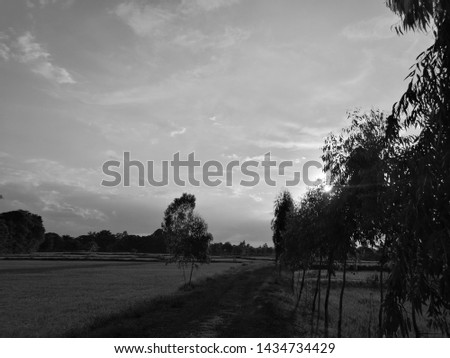 Rural and dirt road in the countryside #1434734429