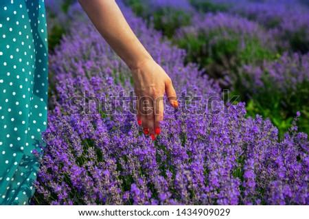 Beautiful lavender fields on a sunny day. Moldova #1434909029