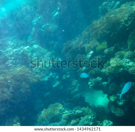 sea fish near coral, underwater #1434962171