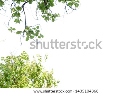 Nature leaf with free space isolated background #1435104368