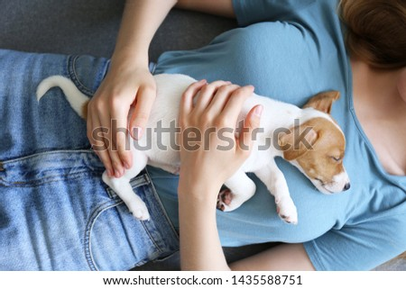 Cute two months old Jack Russel terrier puppy sleeping on young woman's chest. Small adorable doggy w/ funny fur stains resting with owner on couch. Close up, copy space background #1435588751