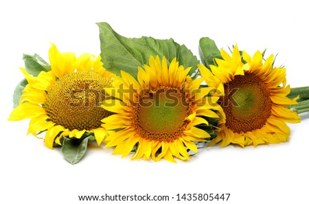 Sunflowers isolated on white background #1435805447
