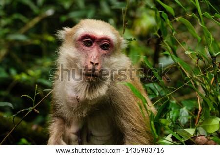 Beautiful female monkey in nature #1435983716