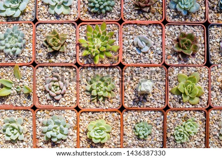 Different succulents in pots, top view. Flowers in market, floral exhibition concept. #1436387330