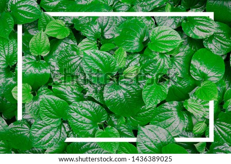 Tropical leaf with white frame. creative layout concept #1436389025