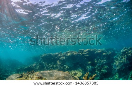 Underwater wide-angle shot of fish and colorful healthy coral  #1436857385