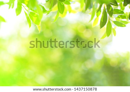 Nature leaf green in the garden.Concept organic leaves green and clean ecology in summer sunlight plants landscape. bokeh blurred bright green use texture wallpaper natural background.selective focus. #1437150878