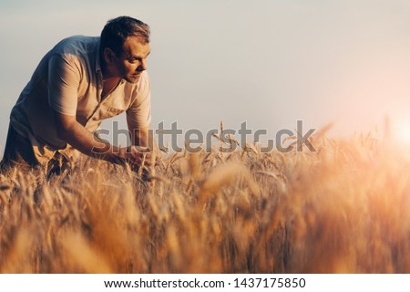 Amazing view with Man who check natural organic harvest In The Sunset Light. Farmer Walking Through Field Checking Wheat Crop.Wheat Sprouts In Farmer's Hand #1437175850