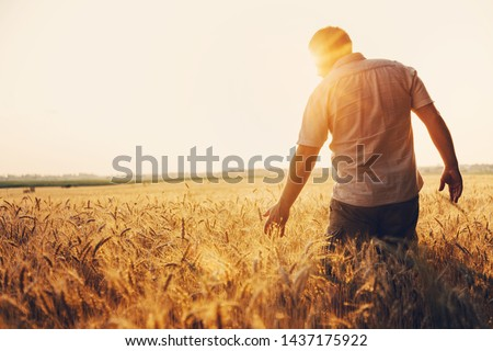 Silhouette of Man agronomist farmer in golden wheat field. Male holds ears of wheat in hand. Royalty-Free Stock Photo #1437175922