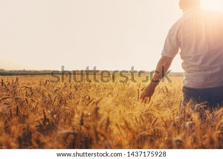 Silhouette of Man agronomist farmer in golden wheat field. Male holds ears of wheat in hand. #1437175928
