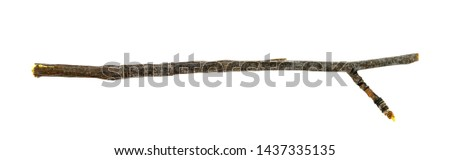 Dry tree twigs branches isolated on white background. close-up #1437335135
