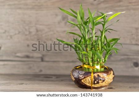 Bamboo in vase #143741938