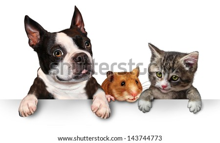 Pets sign for veterinary medicine and pet store or animal adoption advertising and marketing message with a cute dog hamster and a cat hanging on a horizontal white placard with copy space. #143744773