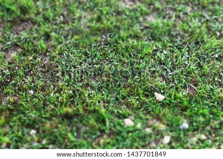 Close up of Green grass yard lawn with Small pebble rocky stones with Tilt-Shift effect camera. tropical summer garden in beautiful natural morning sun light.Abstract nature background.copy space.  #1437701849