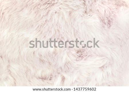 Texture of shaggy fur background. Detail of soft hairy skin material. #1437759602