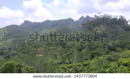 The view of the tea garden in Nglinggo, Kulon Progo, Yogyakarta is green and very beautiful, the air is also cool #1437773804