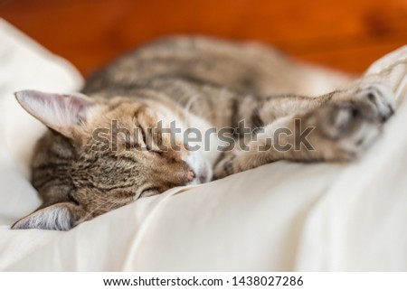 lazy and funny tabby cat sleep on a bed at home #1438027286