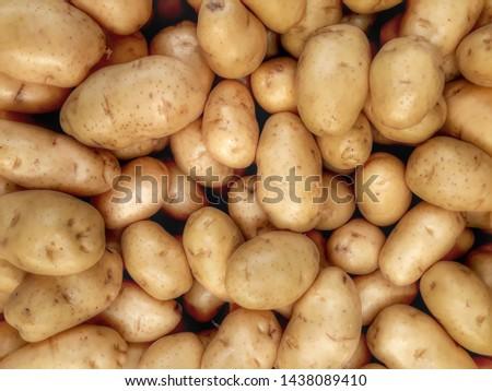 Fresh organic potato stand out among many large background potatos in the market. Heap of potatos root. Close-up potatos texture. Macro potato. #1438089410