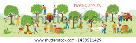 People picking apples in garden vector, man and woman gathering fruits from trees. Trucks and cars for transportation of food, summertime farming. Picking apples from tree to basket. Harvest festival #1438511429