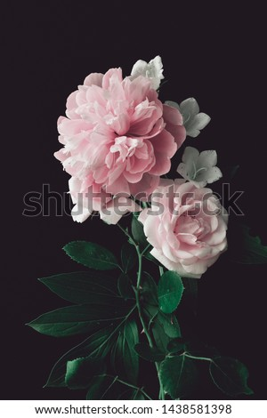 pink peony and pink rose on a dark background. vertical composition, studio shot