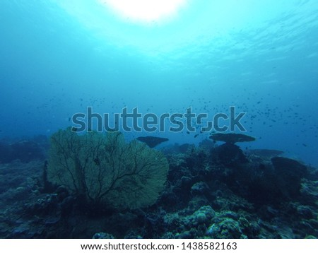 Corals, fish and super clear water in the sun, on the Togean Islands in Sulawesi, Indonesia, south-east Asia. #1438582163