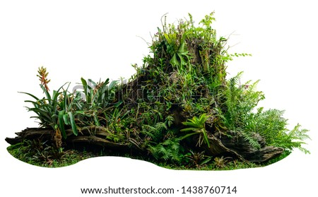 Jungle tree trunk with tropical foliage plants, climbing Monstera (Monstera deliciosa) isolated on white background with clipping path. #1438760714