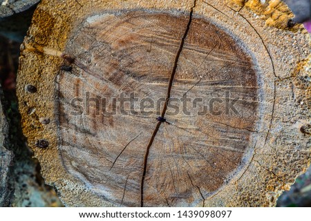 wood timber Background Timber texture #1439098097