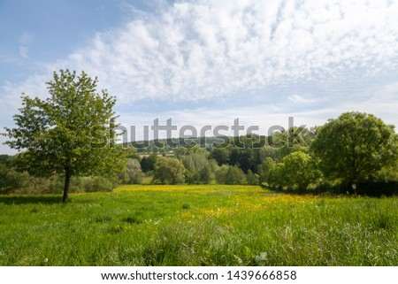 Green trees in a Dutch landscape #1439666858