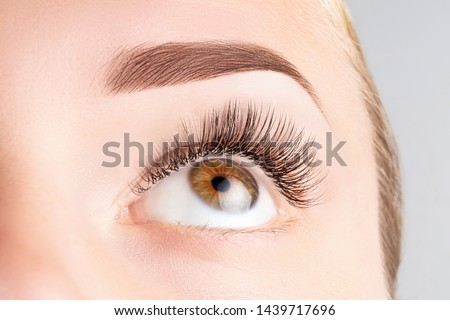 Female eye with long eyelashes. Classic 1D, 2D eyelash extensions and light brown eyebrow close up. Eyelash extensions, lamination, biowave, microblading concept. #1439717696