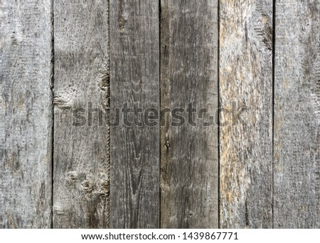 An old unpainted wall of pine planks in the rays of daylight #1439867771