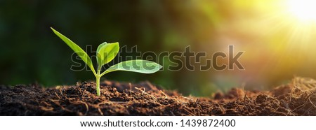 panorama small tree growing with sunrise. green world and earth day concept Royalty-Free Stock Photo #1439872400
