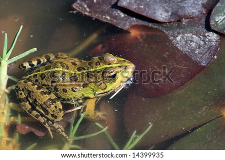 Green frog in the nature #14399935