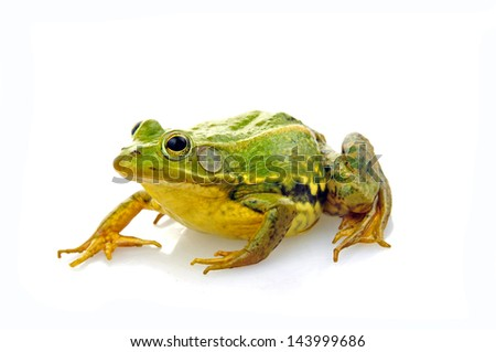 Frog isolated on a white background, and close-up pictures #143999686