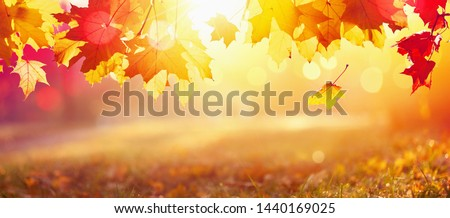 Falling Autumn Maple Leaves Natural Colorful Background #1440169025