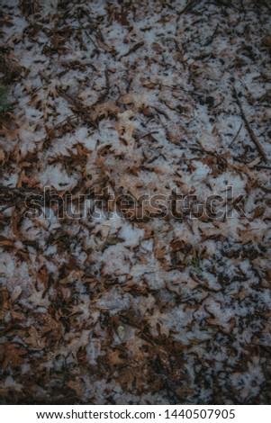 fall leaves, fall Foliage, Fall Foliage with snow #1440507905