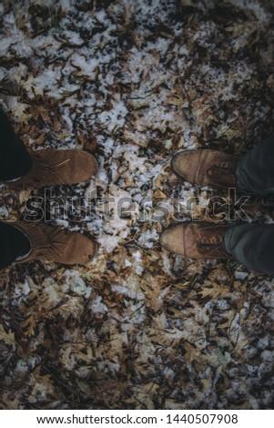 fall leaves, fall Foliage, Fall Foliage with snow #1440507908