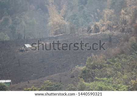 Jhum cultivation (Slash and burn agriculture) in progress at Wokha, Nagaland #1440590321