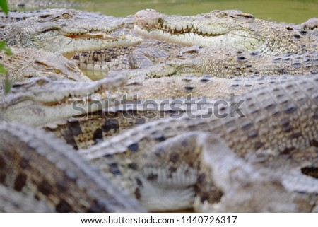 the open mouth of crocodile, wildlife in Medan, Indonesia #1440726317